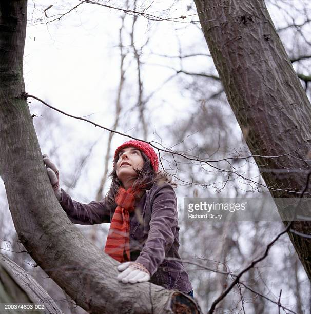 woman climbing beech tree, looking upwards, low angle view - only mid adult women stock pictures, royalty-free photos & images
