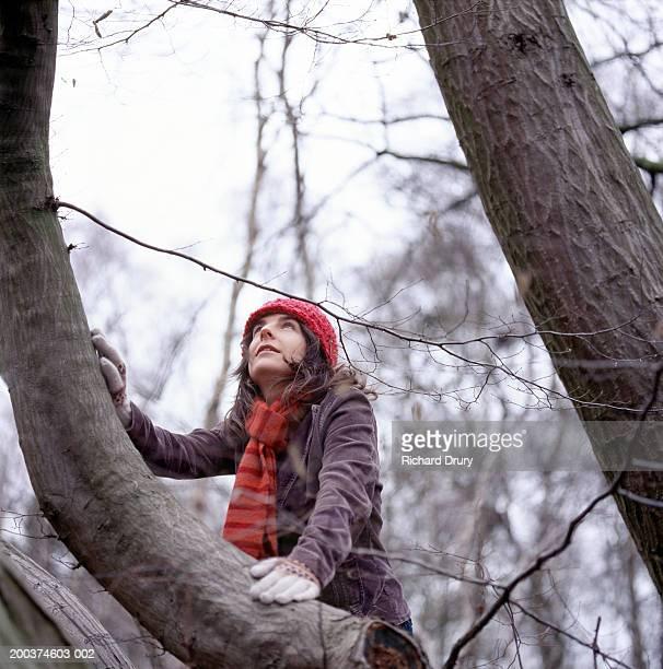 woman climbing beech tree, looking upwards, low angle view - 30代の女性だけ ストックフォトと画像