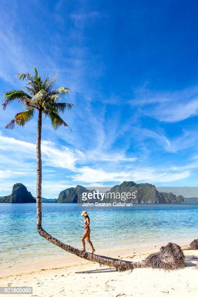 woman climbing coconut palm on the beach in el nido - palawan stock pictures, royalty-free photos & images