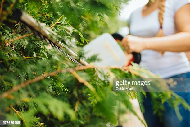 Woman clipping a hedge.