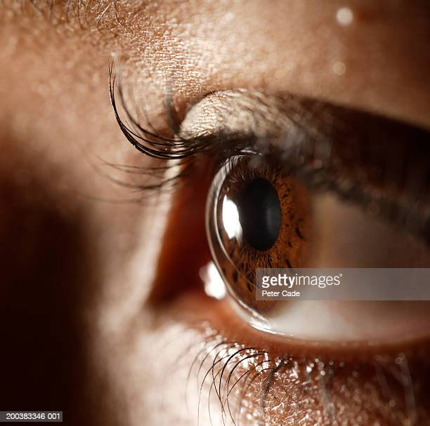 woman, close-up of eye - light brown eyes stock photos and pictures