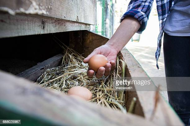 Woman collecting eggs on a farm