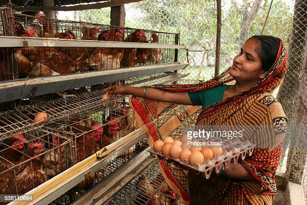 woman collecting eggs - bangladesh stock pictures, royalty-free photos & images