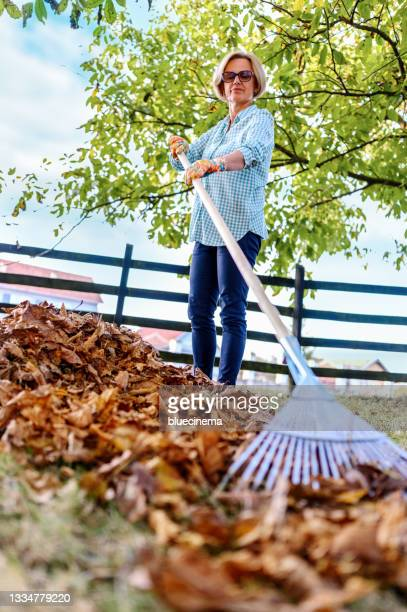 woman collecting fallen autumn leaves in the yard - formal glove stock pictures, royalty-free photos & images