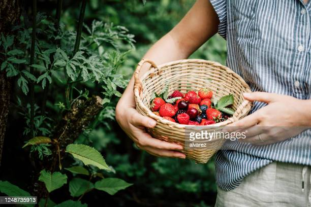 woman collecting fresh berries - berry stock pictures, royalty-free photos & images