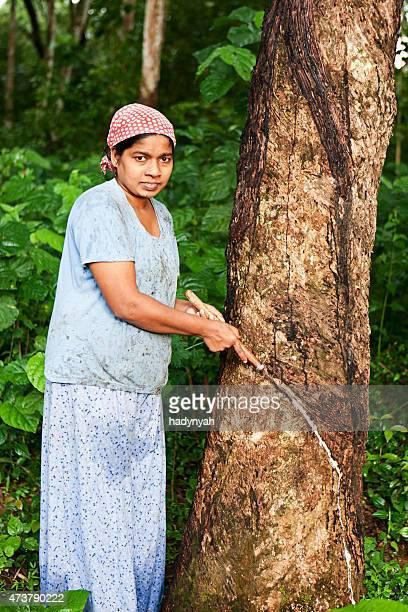 Femme Recueillir le latex de l'hévéa plantation, Sri Lanka