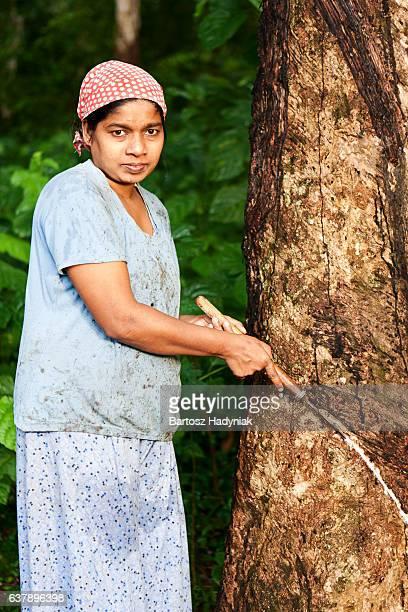 Frau Latex auf der Gummibaum-Plantage in Sri Lanka zu sammeln