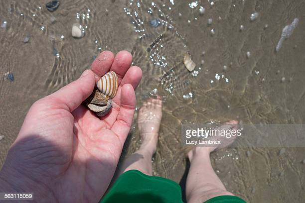 Woman collecting sea shells