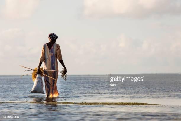 Woman collecting seaweeds from water in Zanzibar, Tanzania