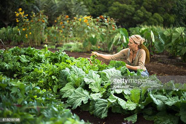 Woman collecting vegetables in garden