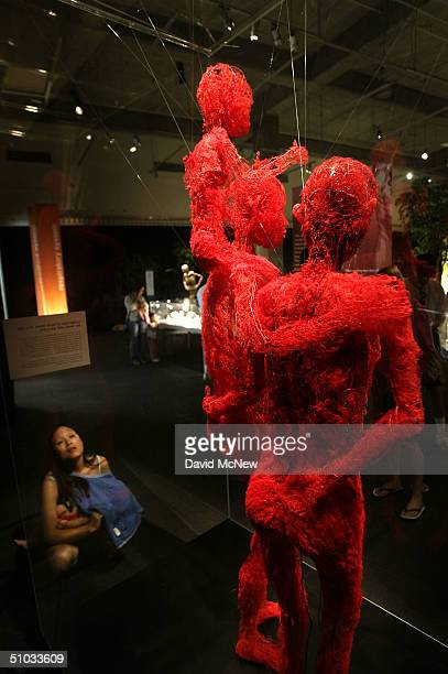 A woman contemplates a family of human bodies showing only their arterial vascular systems at the Body Worlds The Anatomical Exhibition of Real...