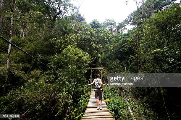 A woman crosses a suspension bridge in a dense rain forest.