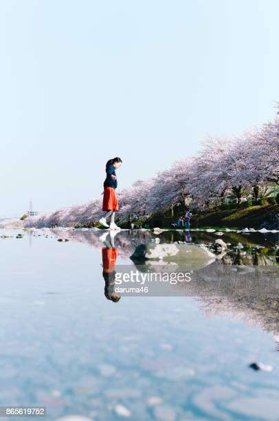 女性の交差の川、桜と川の反射