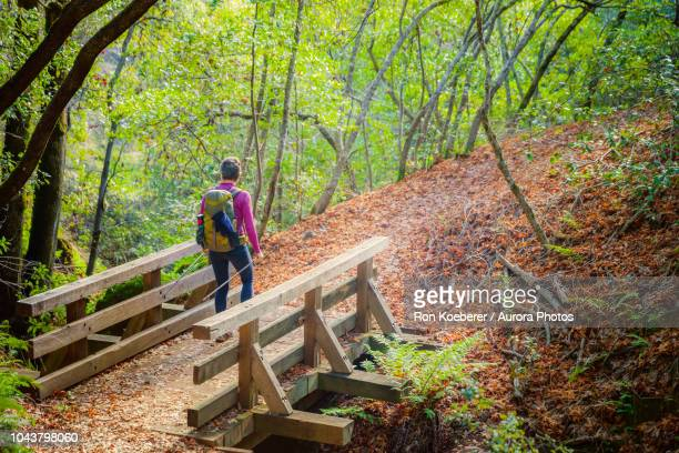 woman crossing wooden bridge while hiking in forest - koeberer stock photos and pictures