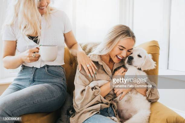 woman cuddles 12 week old golden retriever puppy while another looks on and smiles - small stock pictures, royalty-free photos & images