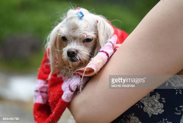 A woman cuddles her pet dog after swimming at a waterfall in Bentong outside Kuala Lumpur in nearby Pahang state on March 18 2018 / AFP PHOTO / Mohd...