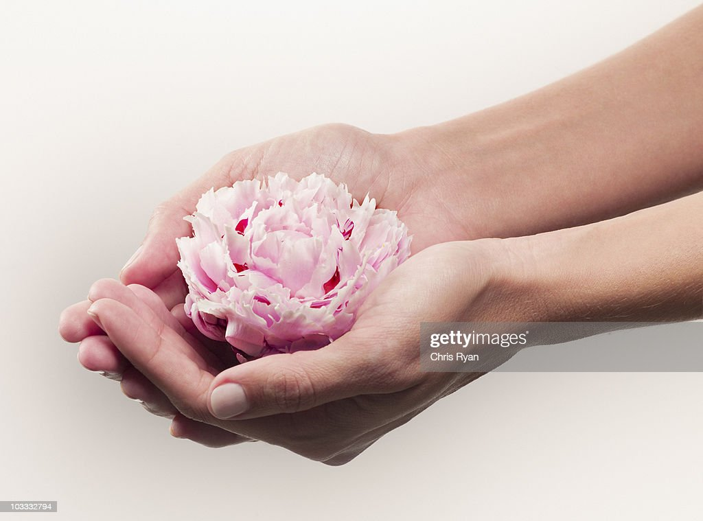 Woman cupping pink peony : Stock Photo