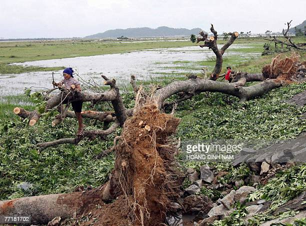 A woman cuts a fallen tree after the passage of the tropical storm Lekima in central province of Ha Tinh 04 October 2007 Typhoon Lekima smashed into...