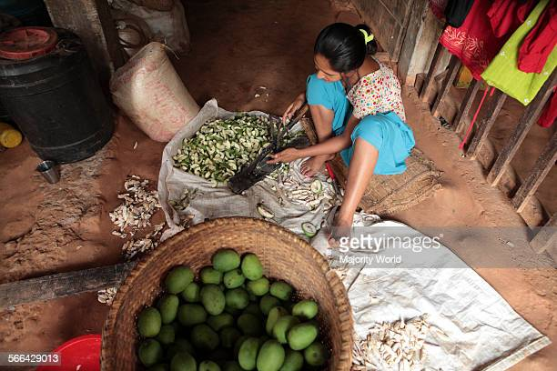 A woman cuts green mangoes into small pieces to make pickle at her home in Benighat Dhading Nepal 2010