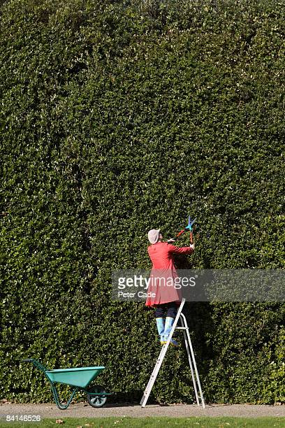 Woman cutting large hedge