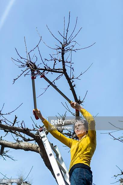 Woman cutting tree branches