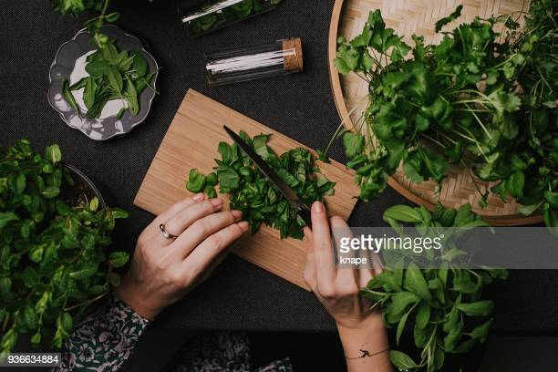 woman cutting various fresh leaf herbs like sage basil oregano thyme - erbe aromatiche foto e immagini stock