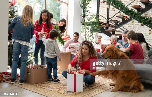 woman decorating the house for christmas with the help of the dog - dezembro imagens e fotografias de stock
