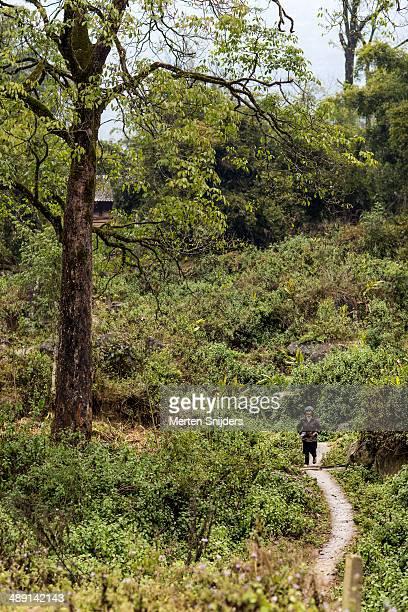woman descending hill trail by tree - merten snijders - fotografias e filmes do acervo
