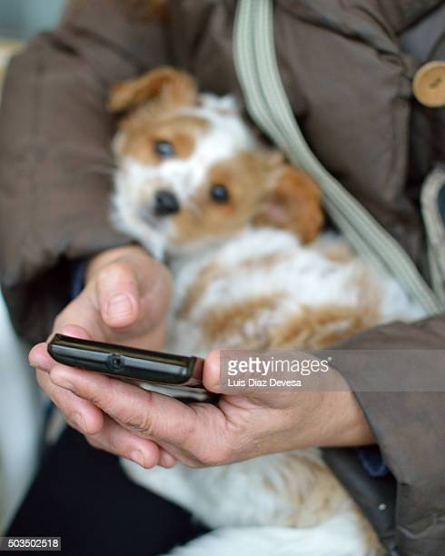 woman dialing phone - chinook dog stock photos and pictures