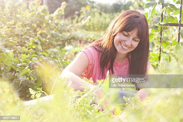 Woman digging in raised bed at allotment