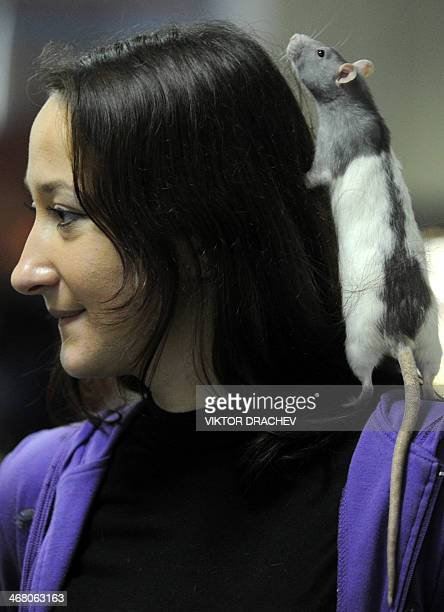 A woman displays her rat at a pet rodent show in Minsk on February 9 2014 AFP PHOTO / VIKTOR DRACHEV
