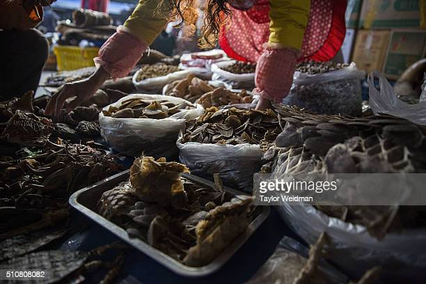 Woman displays pangolin scales on February 17, 2016 in Mong La, Myanmar. Mong La, the capital of Myanmar's Special Region No. 4, is a mostly lawless...