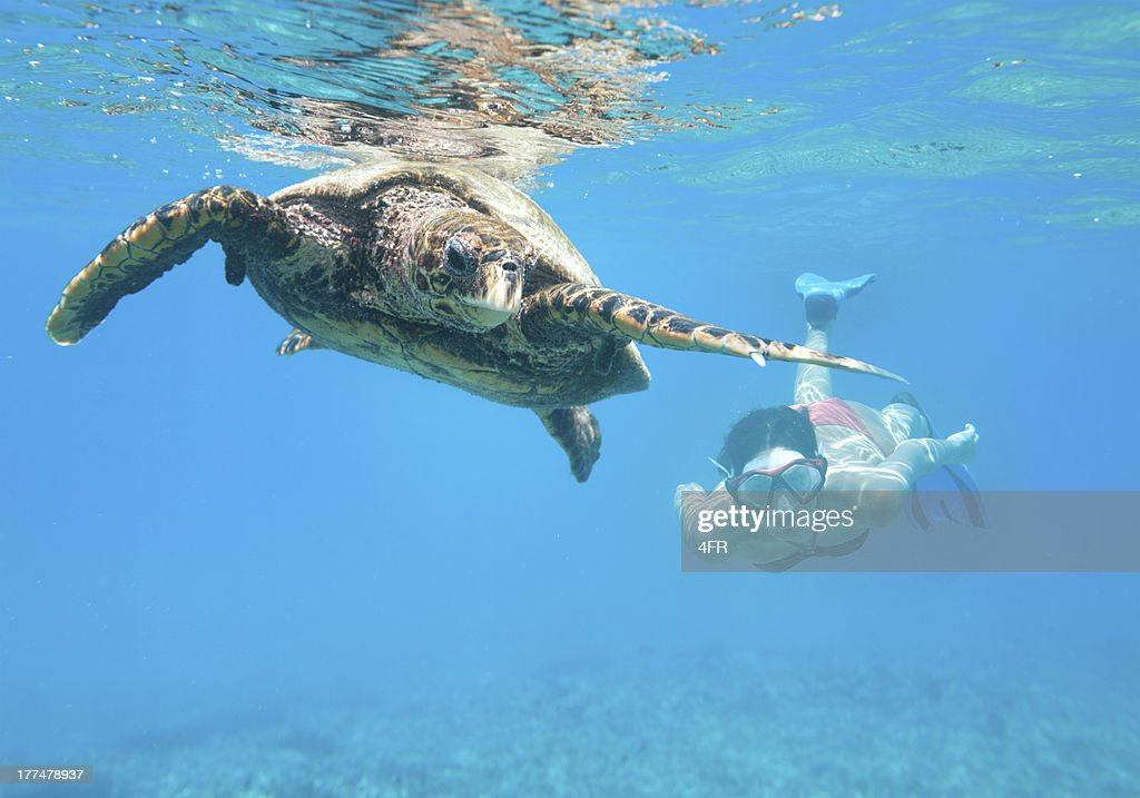 Woman diving with a Hawksbill Sea Turtle, Seychelles : Stock Photo