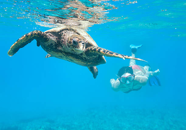 Woman diving with a Hawksbill Sea Turtle, Seychelles