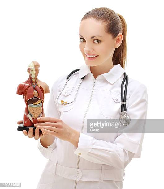 Woman doctor artificial model of the human body