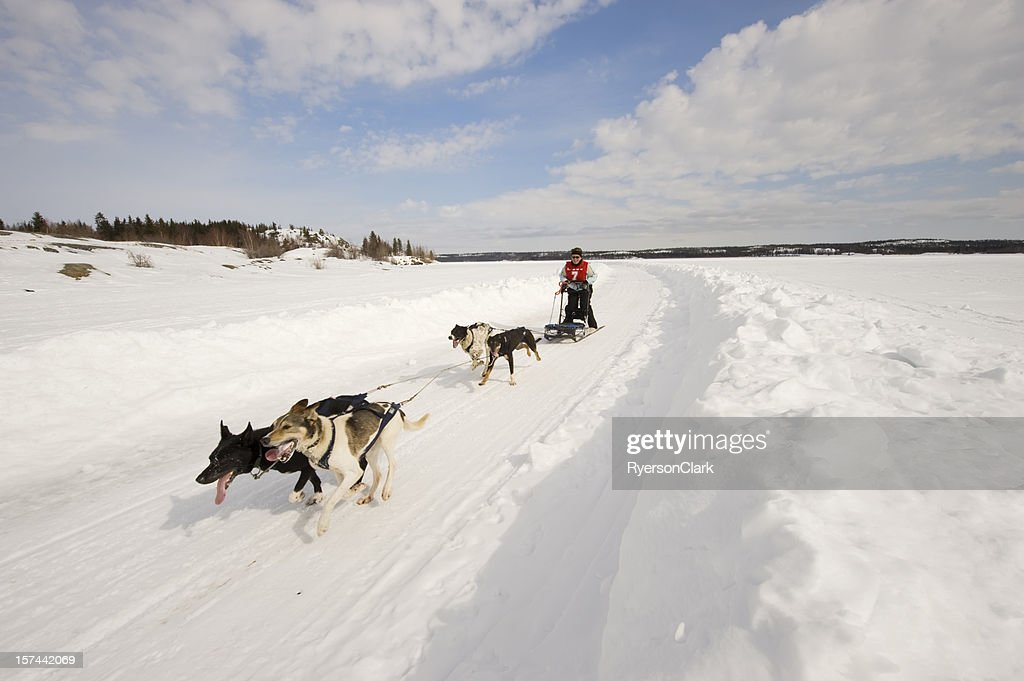 Woman Dogsled Racing in the Arctic, Yellowknife. : Stock Photo