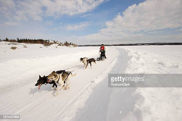 Woman Dogsled Racing in the Arctic, Yellowknife.
