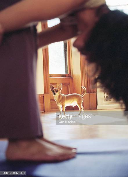 Woman doing exercise, dog looking on (focus on dog)