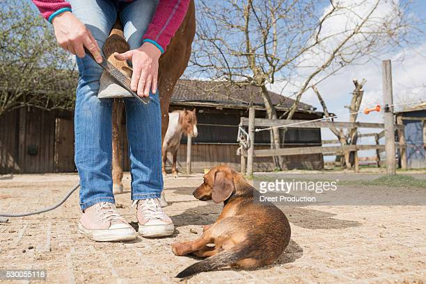 Woman doing horse's hoof manicure at farm, Bavaria, Germany