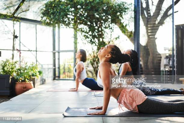 woman doing upward facing dog pose with friends - yoga studio stock pictures, royalty-free photos & images