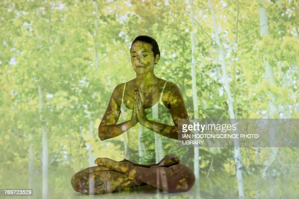 woman doing yoga with tree projection - projektion stock-fotos und bilder
