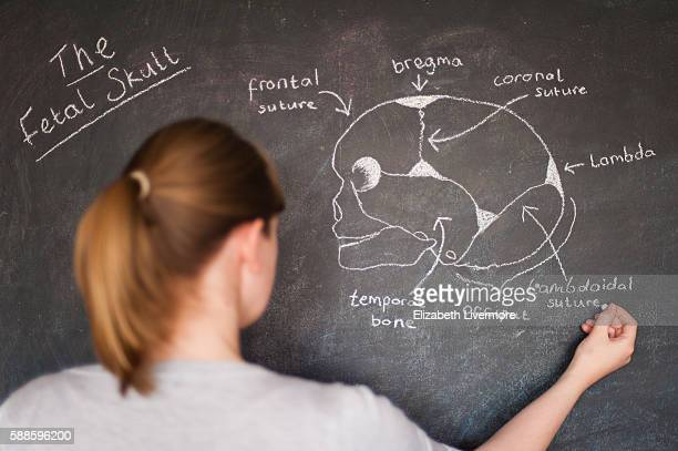 Woman drawing the fetal skull with chalk