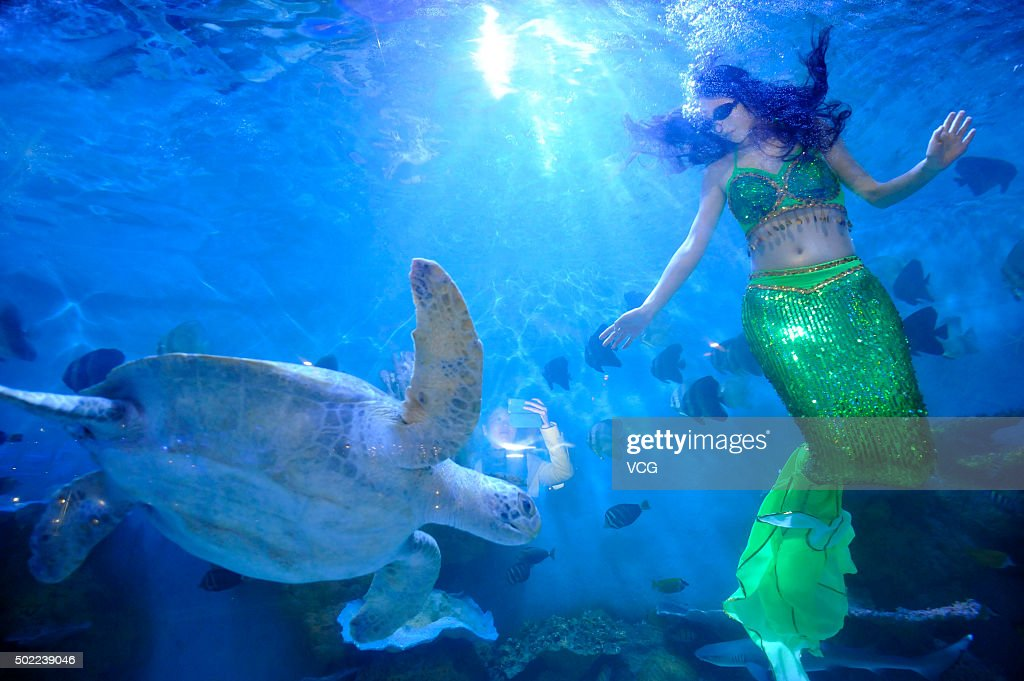 a woman dressed as the mermaid performs with a turtle in a western restaurant on december - Large Restaurant 2015