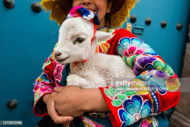 Woman dressed in colorful traditional clothes and tunic holding a baby lama called a cria.