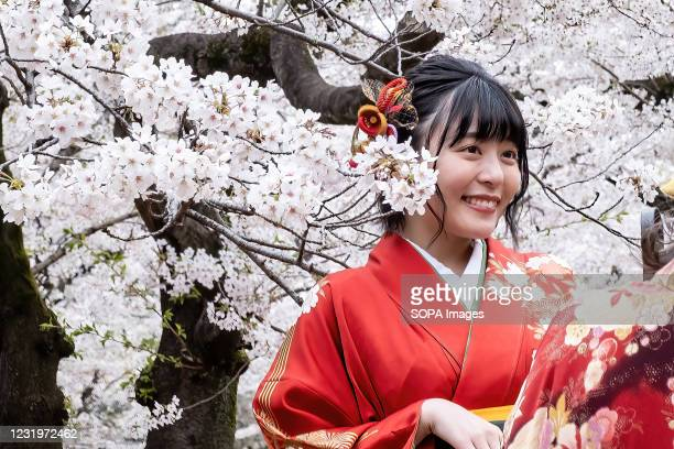 Woman dressed in Kimono poses for a photo next to cherry blossom flowers at the Yoyogi Park in Tokyo. Sakura area is blocked by the orange lines to...