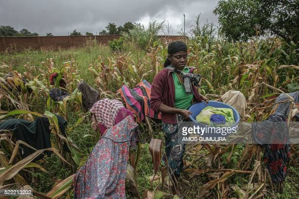 A woman dries clothes at a failed maize field by a church used as a refuge camp for people displaced by floods caused by incessant rains in the city...