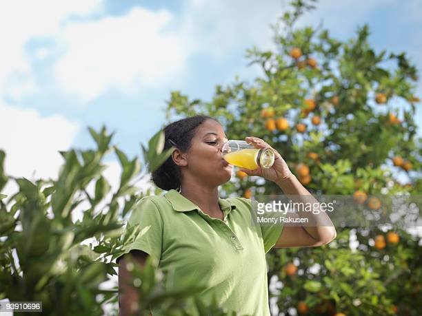 woman drinking juice in orange grove - grove_(nature) stock pictures, royalty-free photos & images