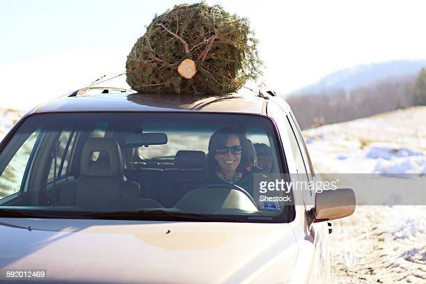 woman driving christmas tree home on car roof - southern christmas stock pictures, royalty-free photos & images