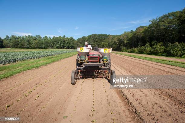 CONTENT] Woman driving red tractor to fertilize newly transplanted greens on organic farm Brunswick Maine