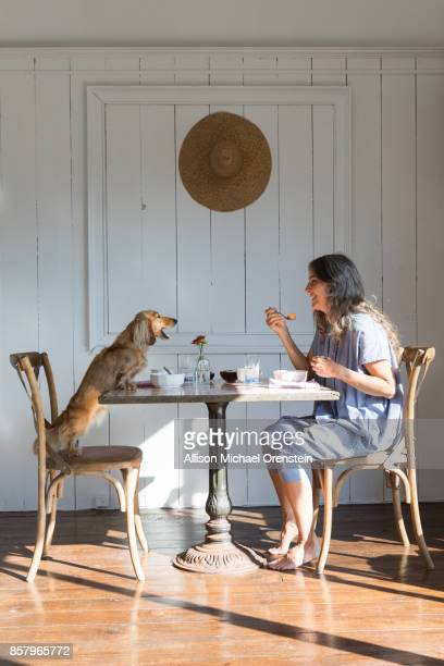 woman eating breakfast with her pet dog, long haired dachshund - long haired dachshund stock photos and pictures